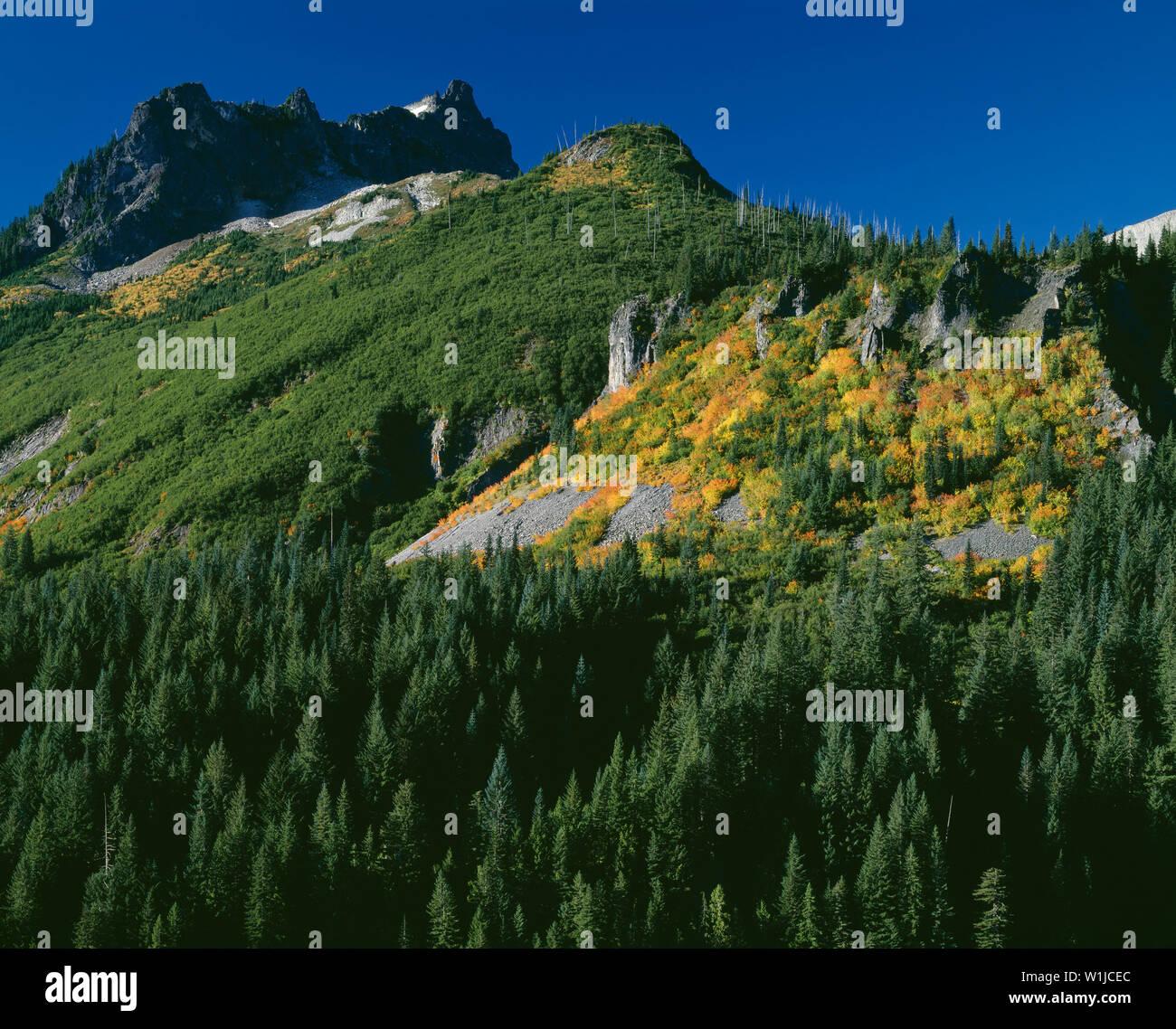USA, Washington, Mt. Rainier National Park, Stevens Peak, part of the Tatoosh Range, above evergreen forest and fall-colored vine maple. - Stock Image