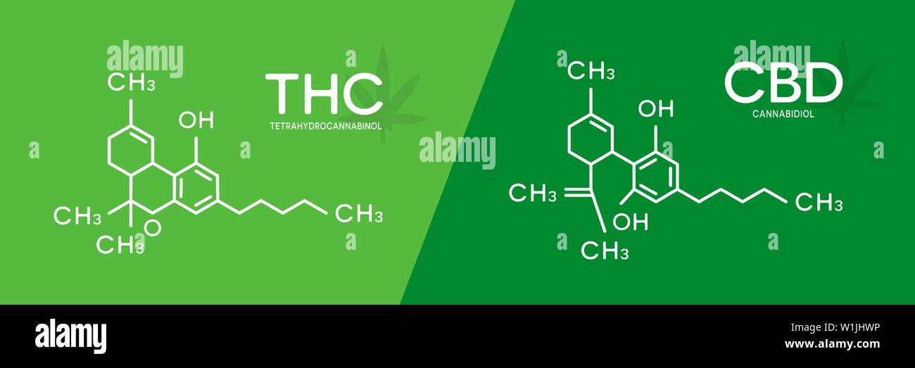 THC and CBD formula. Tetrahydrocannabinol and cannabidiol molecule structure. Stock Vector