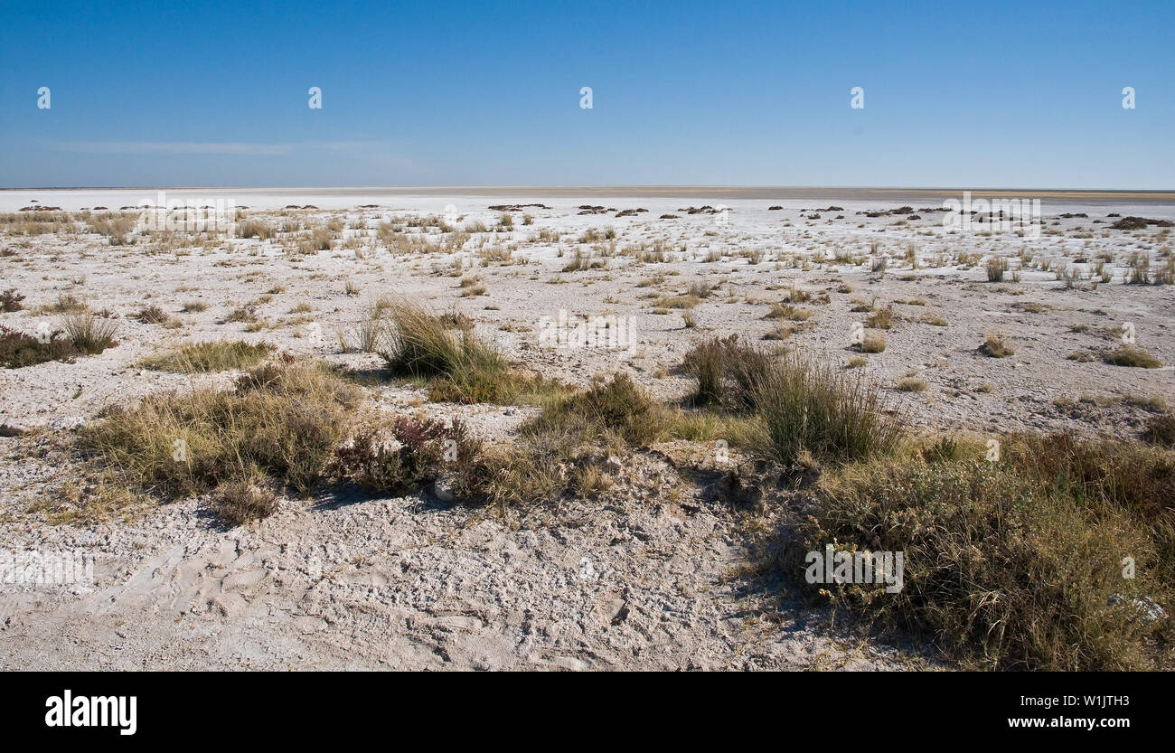 The stark white sand of the Etosha Pan stands out against the brilliant blue sky just east of Okaukeujo in Namibia's Etosha National Park. (c) 2008 To - Stock Image
