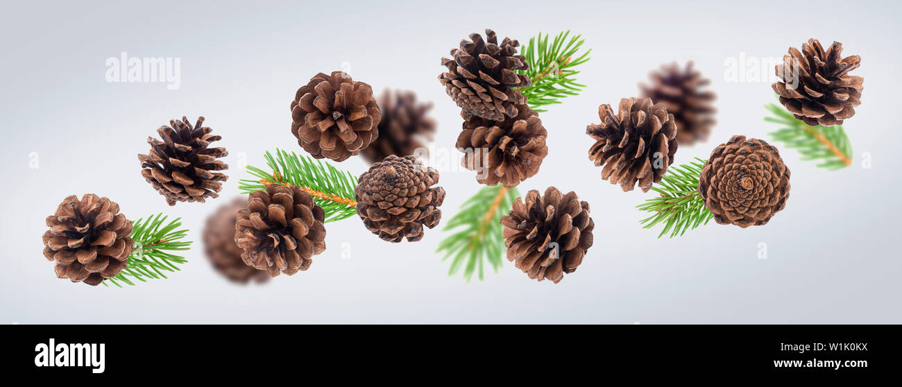 Brown pine cones with fir tree branches close up - Stock Image