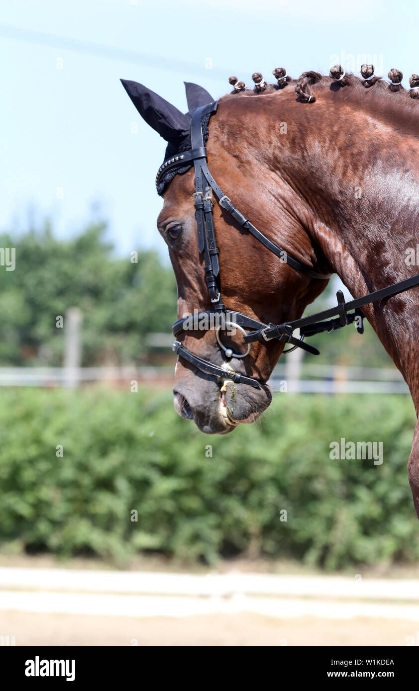 Unknown contestant rides at dressage horse event on riding ground indoors Stock Photo