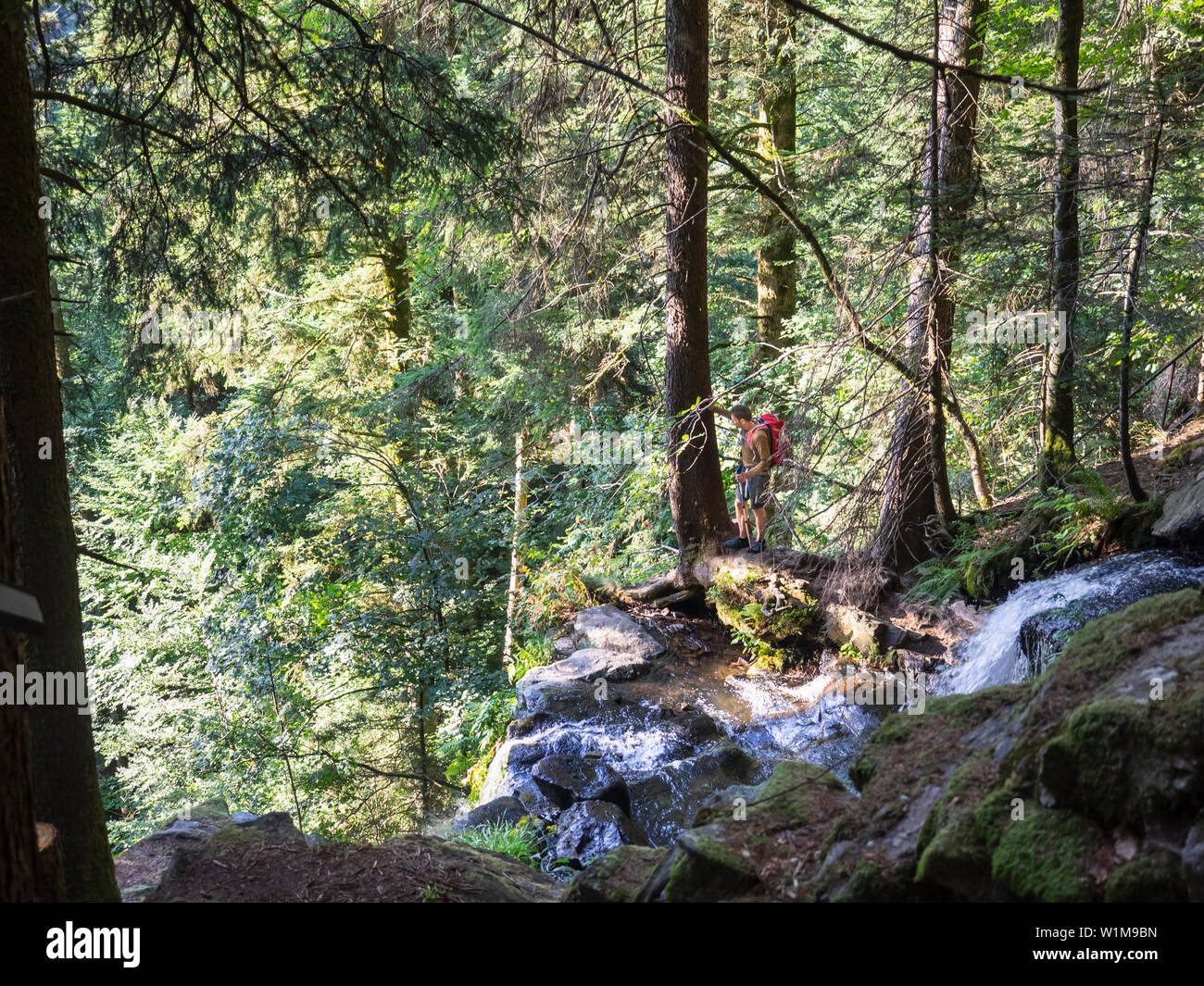 Male hiker by stream in Black Forest, Baden-Württemerg, Germany - Stock Image