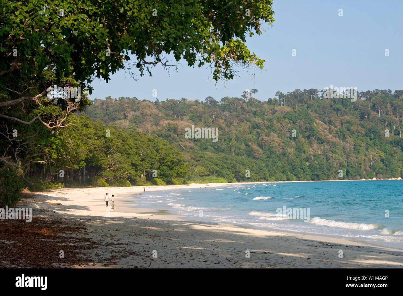 Coastal rainforest, Havelock Island, Andaman Sea, Kuesten-Regenwald, Strand, Bucht, Havelock, Andamanen, IndienCoastal Rainforest, beach, Andaman Isla - Stock Image