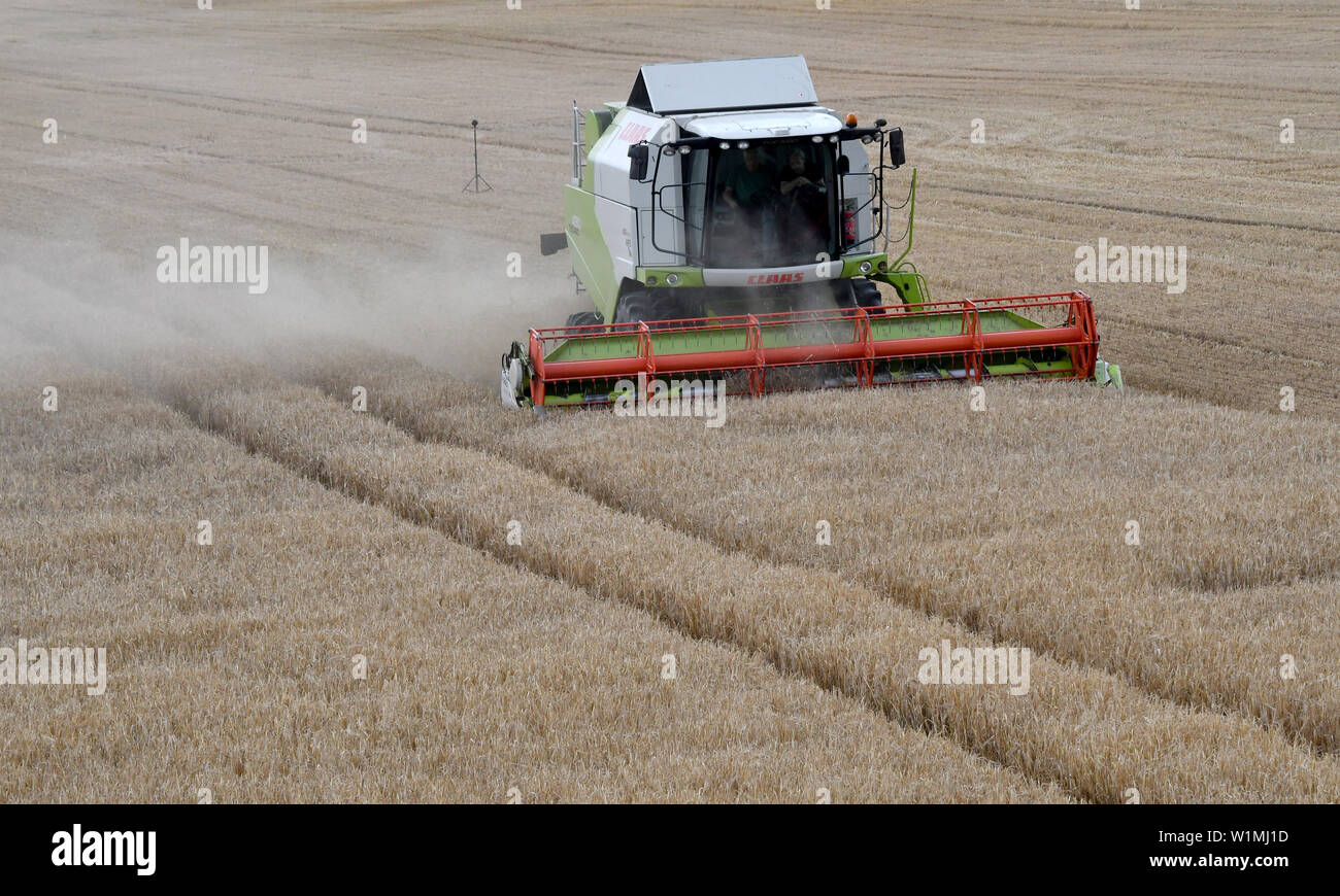 03 July 2019, Brandenburg, Dallgow-Döberitz: A combine harvester harvests winter barley on a Brandenburg farm after the press conference of the German Farmers' Association at the start of the harvest. Late frosts and drought are expected to cause large crop losses. Photo: Bernd Settnik/dpa-Zentralbild/dpa - Stock Image