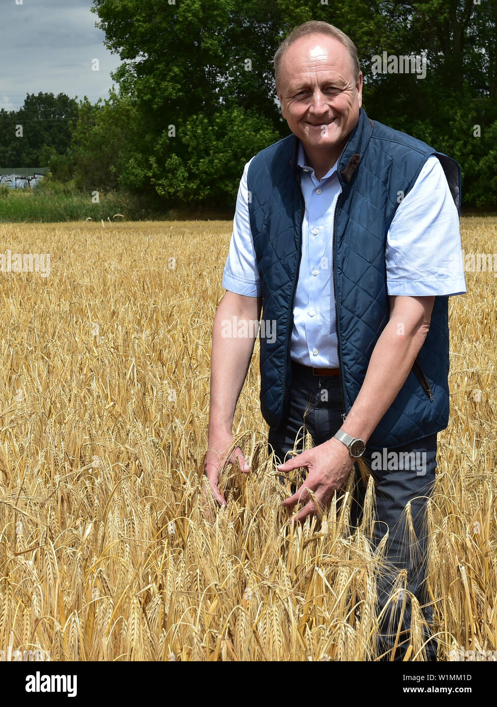 03 July 2019, Brandenburg, Dallgow-Döberitz: Joachim Rukwied, President of the German Farmers' Association, examines the quality of winter barley on a Brandenburg farm at the press conference to start the harvest. Due to late frosts and drought, large harvest losses are expected. Photo: Bernd Settnik/dpa-Zentralbild/dpa - Stock Image