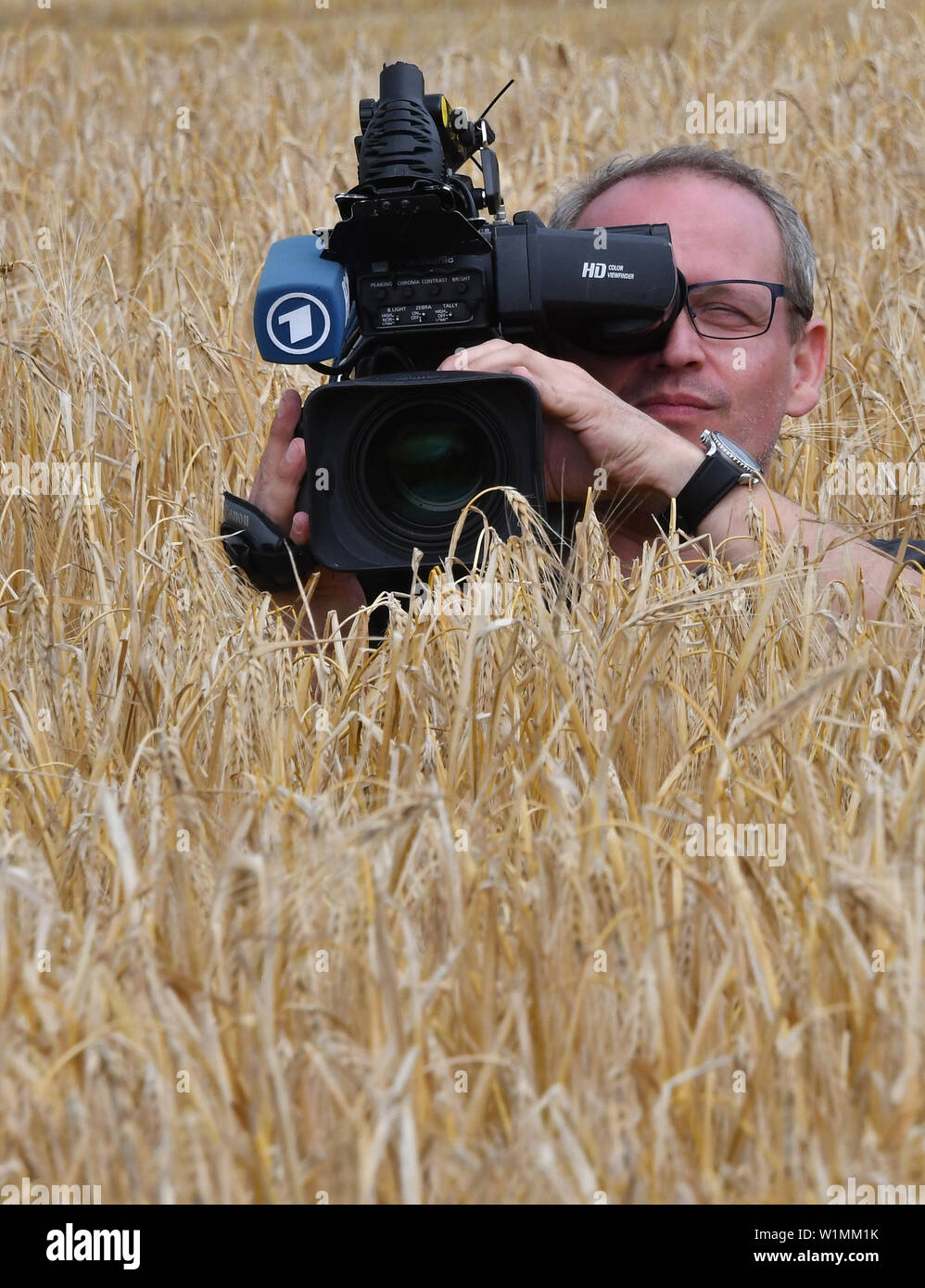 03 July 2019, Brandenburg, Dallgow-Döberitz: A cameraman films the winter barley on a Brandenburg farm during the press conference on the start of the harvest test. Due to late frosts and drought, large harvest losses are expected. Photo: Bernd Settnik/dpa-Zentralbild/dpa - Stock Image