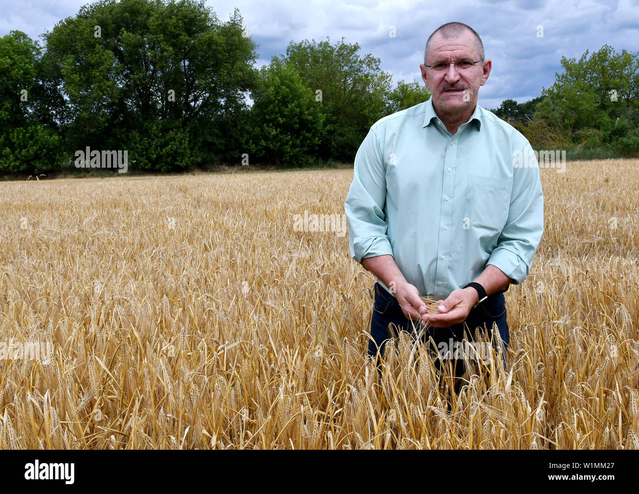 03 July 2019, Brandenburg, Dallgow-Döberitz: Henrik Wendorff, President of the Brandenburg State Farmers' Association, examines the quality of winter barley on a Brandenburg farm at the press conference at the start of the harvest. Due to late frosts and drought, large harvest losses are expected. Photo: Bernd Settnik/dpa-Zentralbild/dpa - Stock Image
