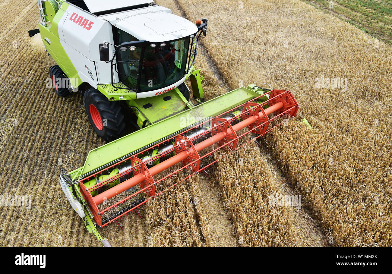 03 July 2019, Brandenburg, Dallgow-Döberitz: A combine harvester harvests winter barley on a Brandenburg farm after the press conference of the German Farmers' Association at the start of the harvest. Due to late frosts and drought, large harvest losses are expected. Photo: Bernd Settnik/dpa-Zentralbild/dpa - Stock Image