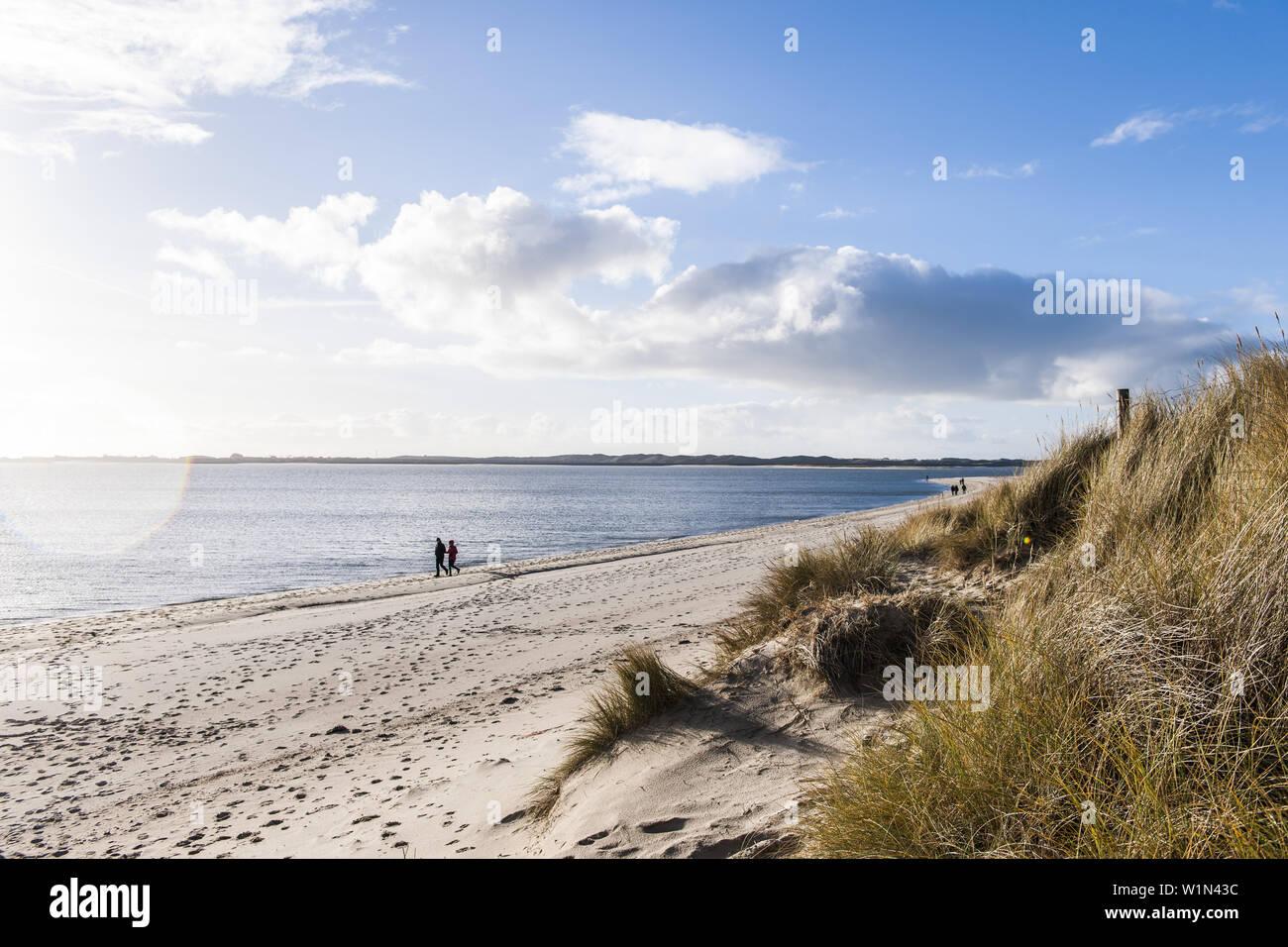 Nature Reserve At Ellenbogen Island Of Sylt Schleswig Holstein