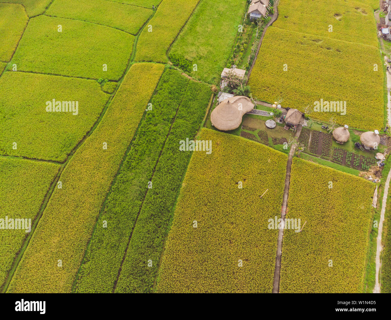Image of beautiful Terraced rice field in water season and Irrigation from drone,Top view of rices paddy - Stock Image