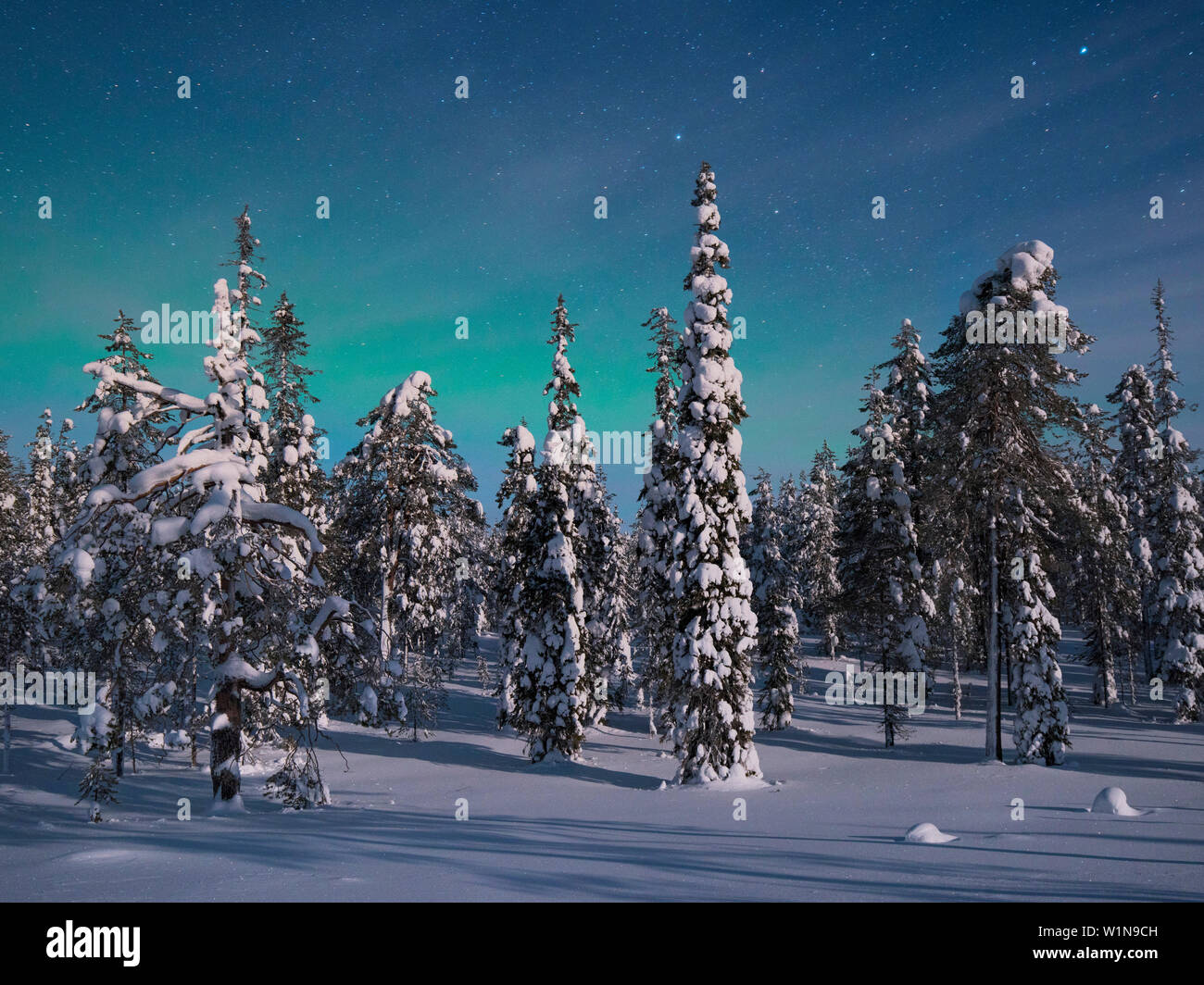 Panoramic view with snowy forest and frozen trees under a starry sky with northern lights in winter, Riisitunturi National Park, Kuusamo, Lapland, Fin Stock Photo