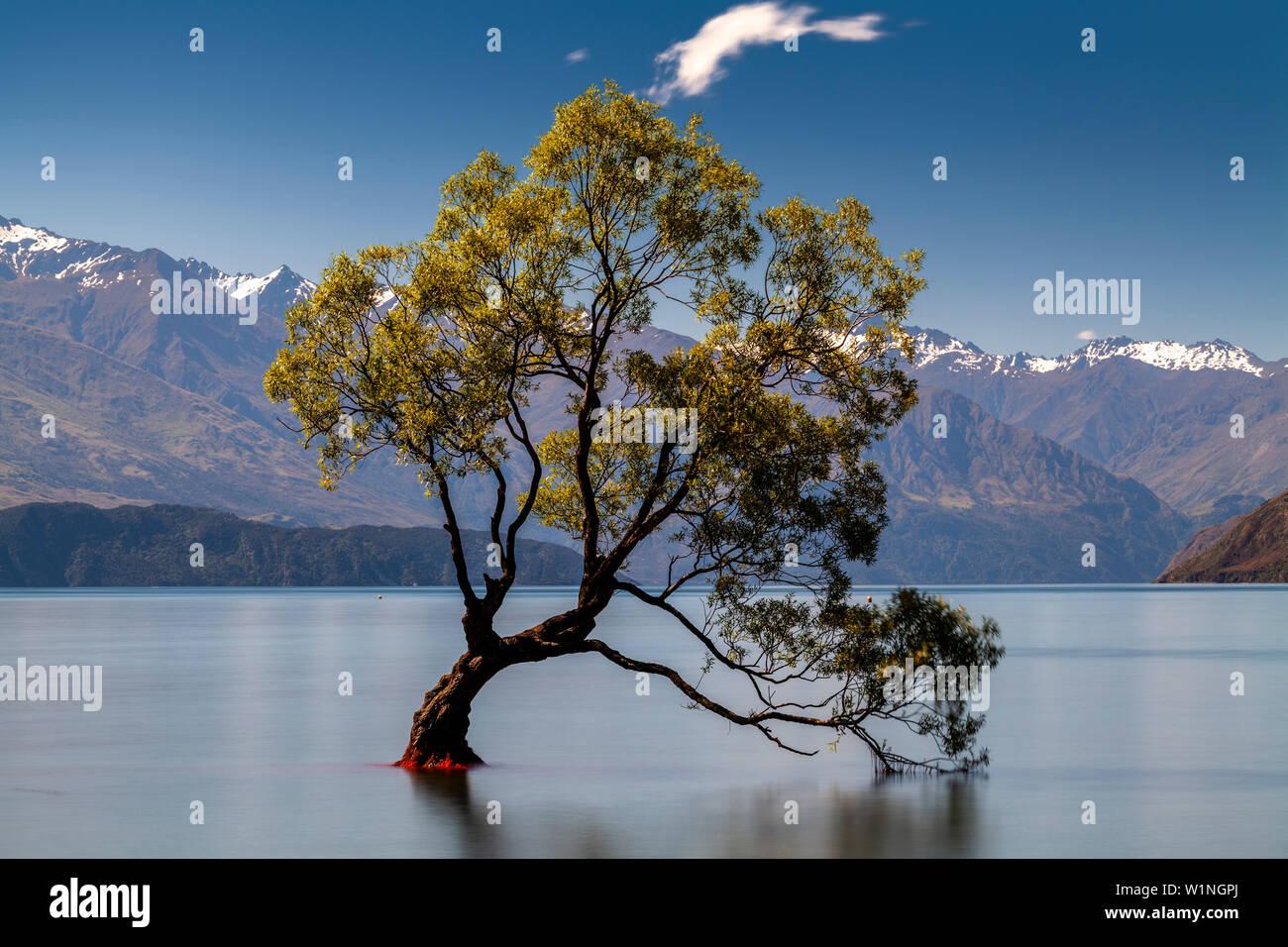 The Iconic 'Lone Tree' In The Lake, Lake Wanaka, Otago Region, South Island, New Zealand Stock Photo