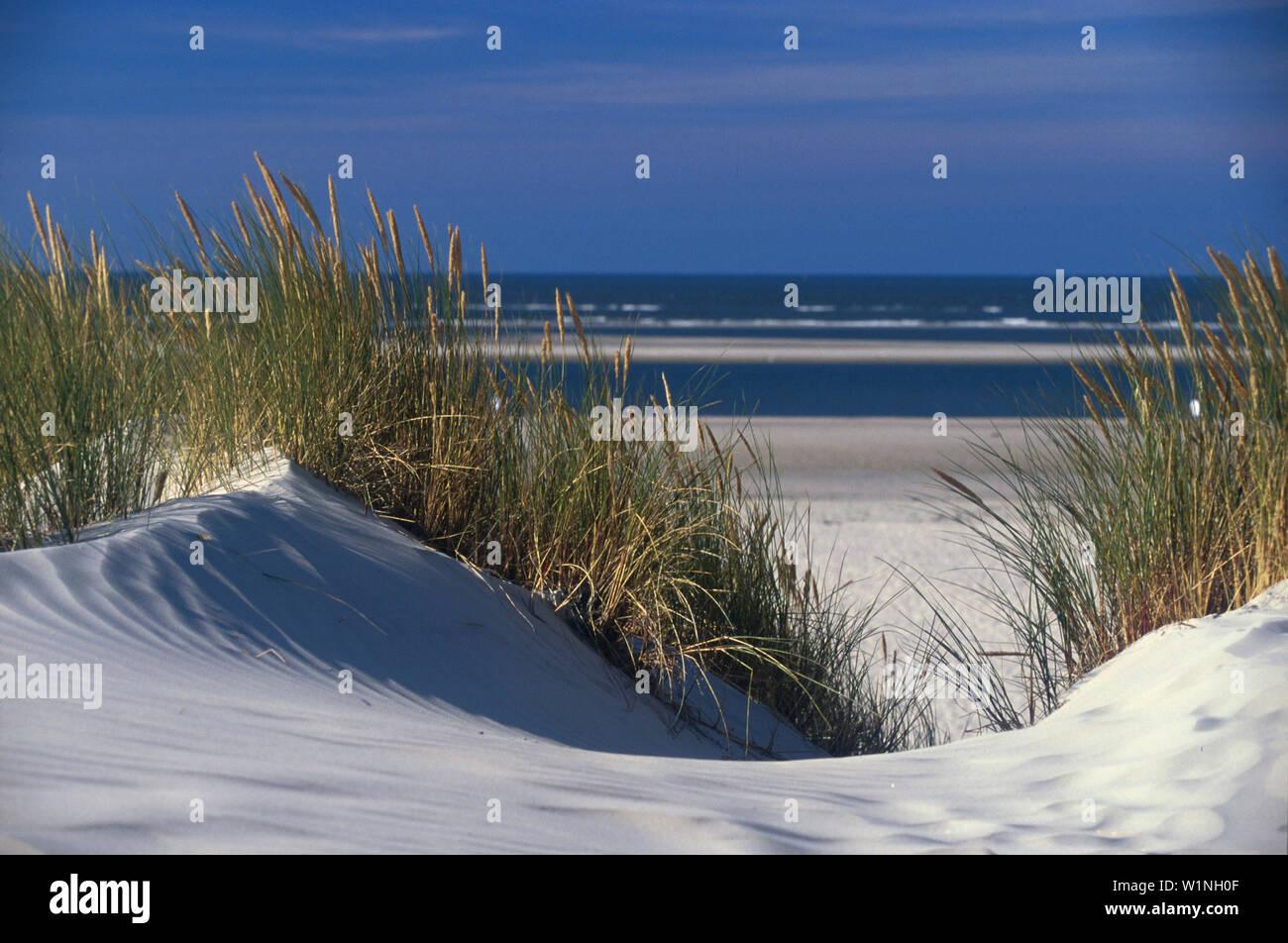 Duenen, Nordsee, Niedersachsen Deutschland - Stock Image