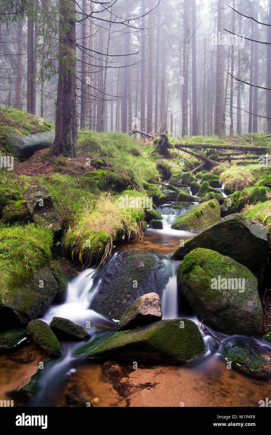 Stream at the foot of Brocken mountain, Harz National Park, Saxony-Anhalt, Germany - Stock Image