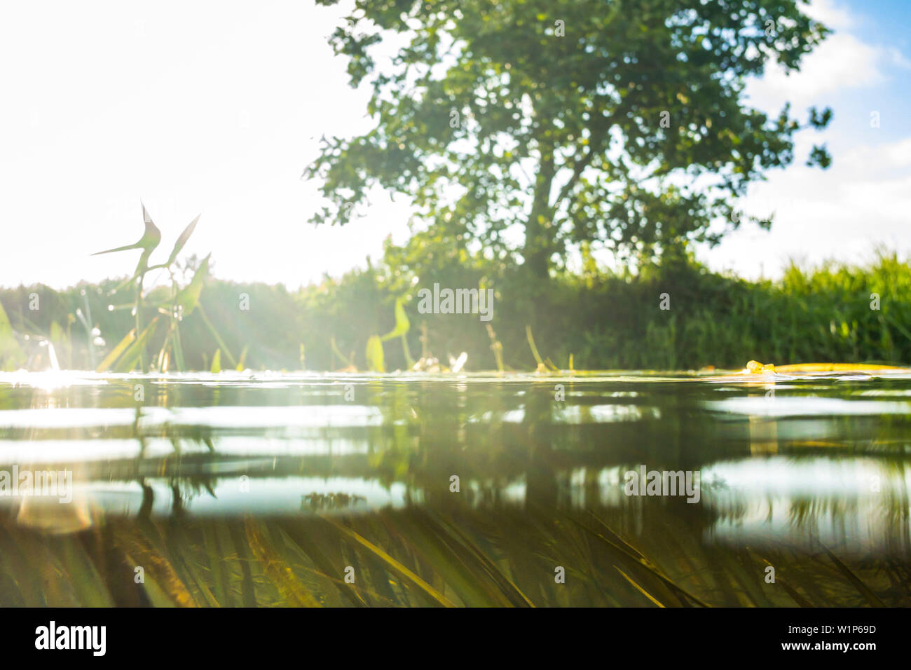 Kayak tour on the river Spree, Water Surface, Spreewald, Biosphere Reserve, Summer, Cultivated Land, Brandenburg, Germany - Stock Image
