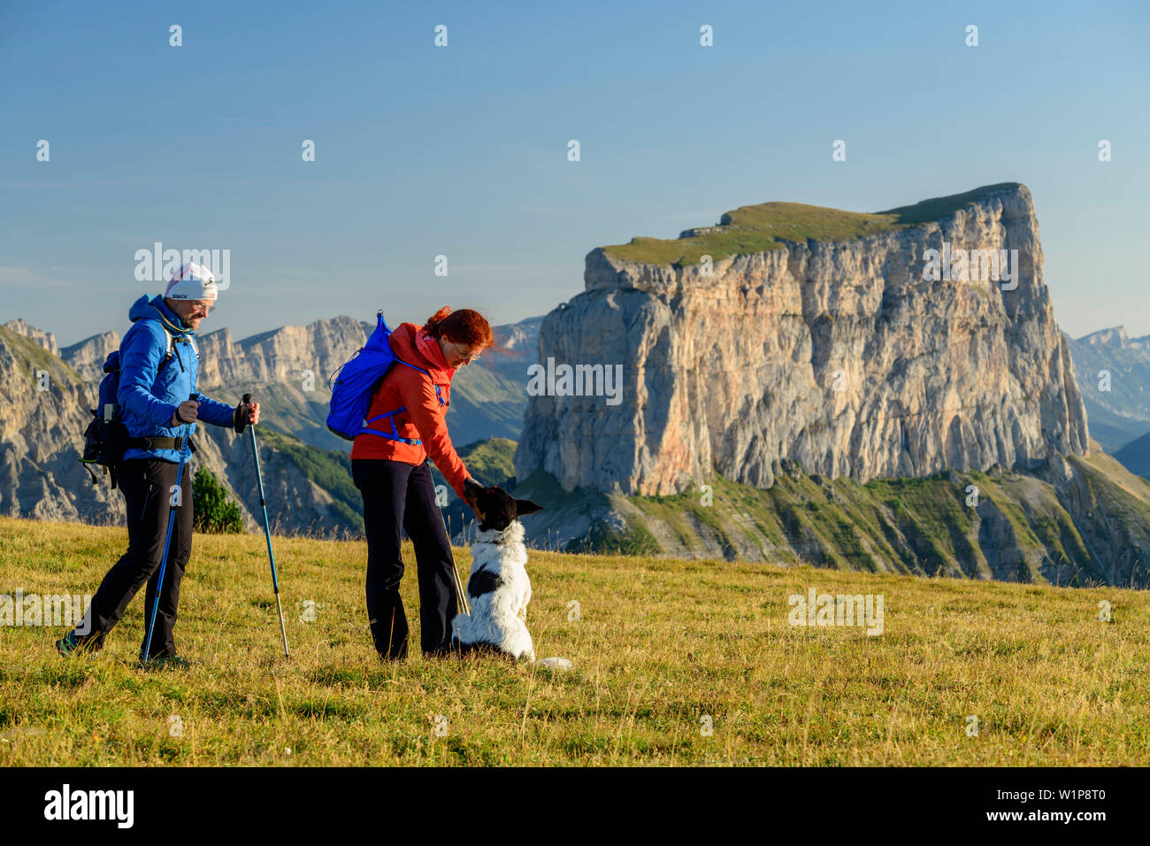 A man and a woman with dog when walking on meadow with Mont Aiguille in the background, from the Tête Chevalier, Vercors, Dauphine, Dauphine, Isère, F - Stock Image