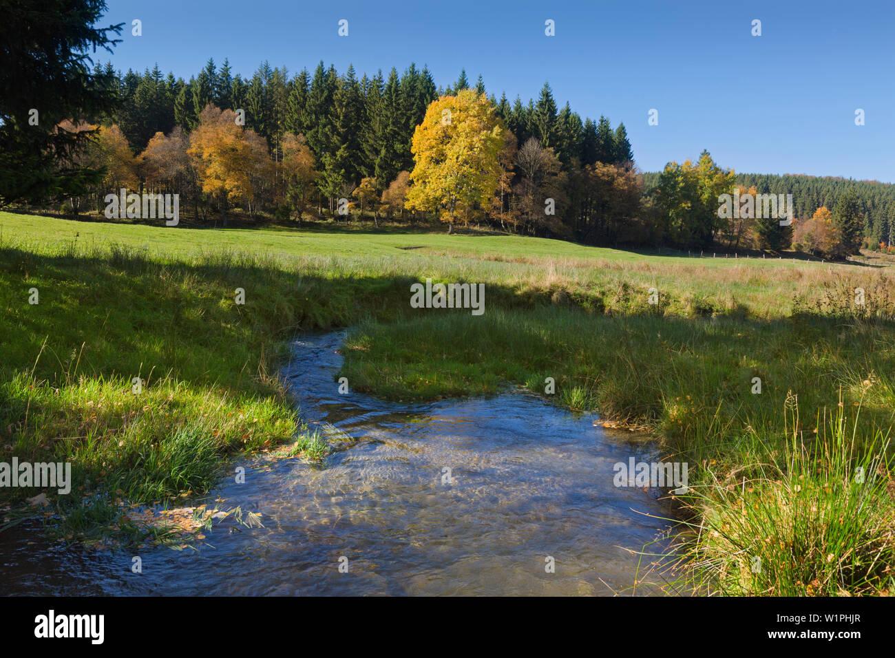 Ruhr valley, near Winterberg, Rothaarsteig hiking trail, Rothaar mountains, Sauerland, North Rhine-Westphalia, Germany - Stock Image
