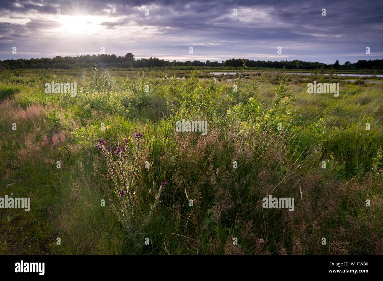 Goldenstedter Moor in the evening light, Goldenstedt, Vechta, Wildeshauser Geest, Lower Saxony, Germany Stock Photo