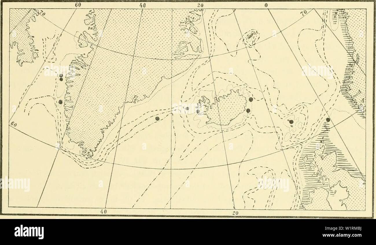Archive image from page 70 of The Danish Ingolf-expedition (1898). The Danish Ingolf-expedition  danishingolfexpe1517dani Year: 1898 HVDROIDA II 65 mobile sarcothecse. The hydrocladia are divided by transverse nodes into internodia of which normally every second one bears one or two unpaired sarcothecse in the median line, the alternate ones having a small hydrotheca with a snpracalycine pair of sarcothecse at the month, and an unpaired median sar- cotheca on the proximal part of the internodium. The hydrotheca is about '/s to ', the length of the internodium, and is on one side entirely fused - Stock Image