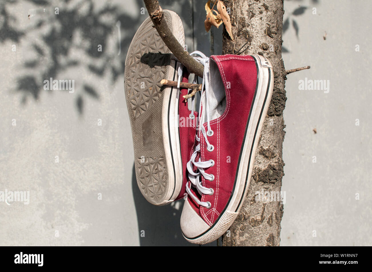 45355ba4b88fcb Pair of worn out vintage red old canvas sneakers hanging on their laced  ties - Stock