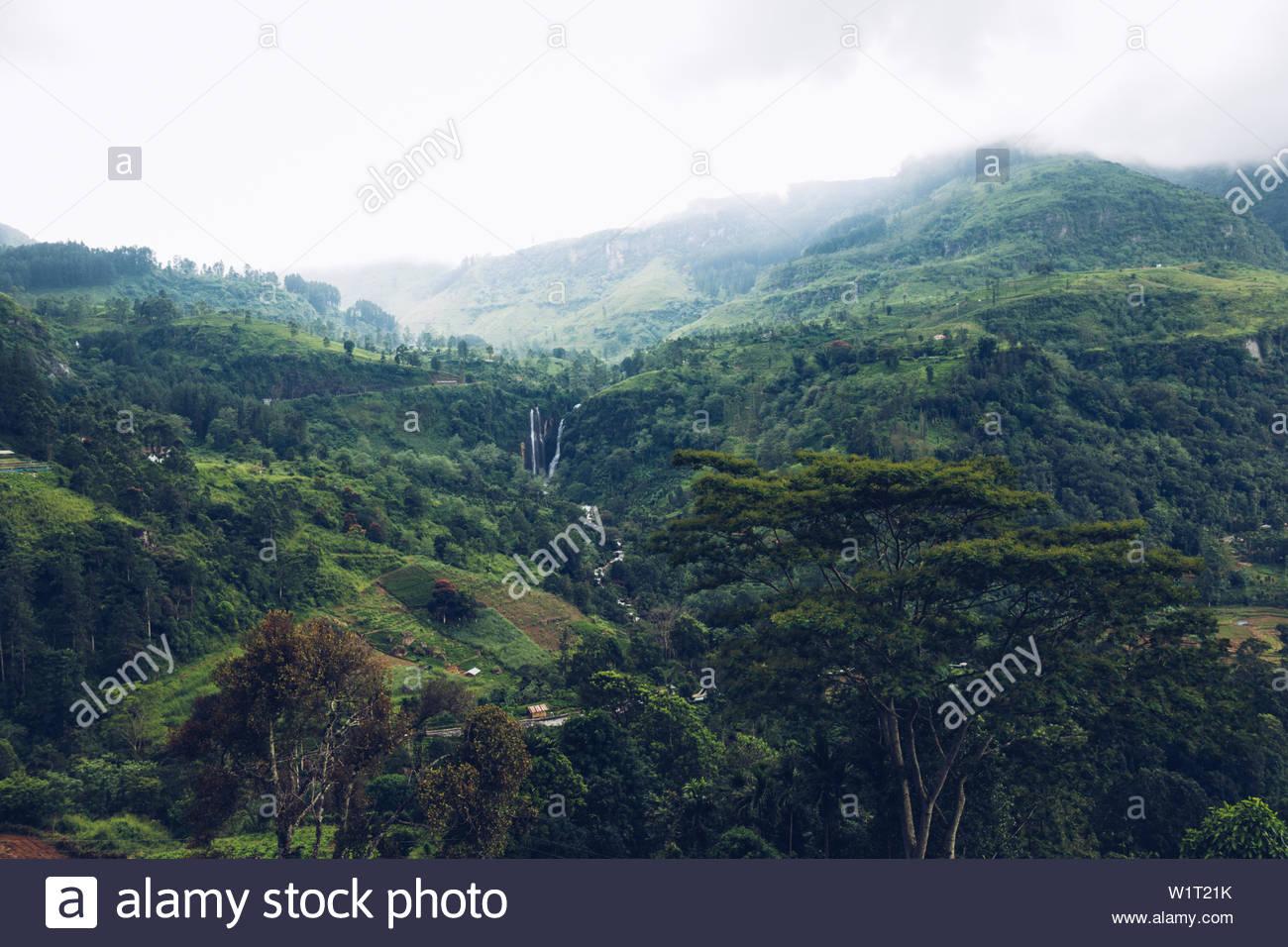 Tea-Plantage in Sri Lanka Stock Photo