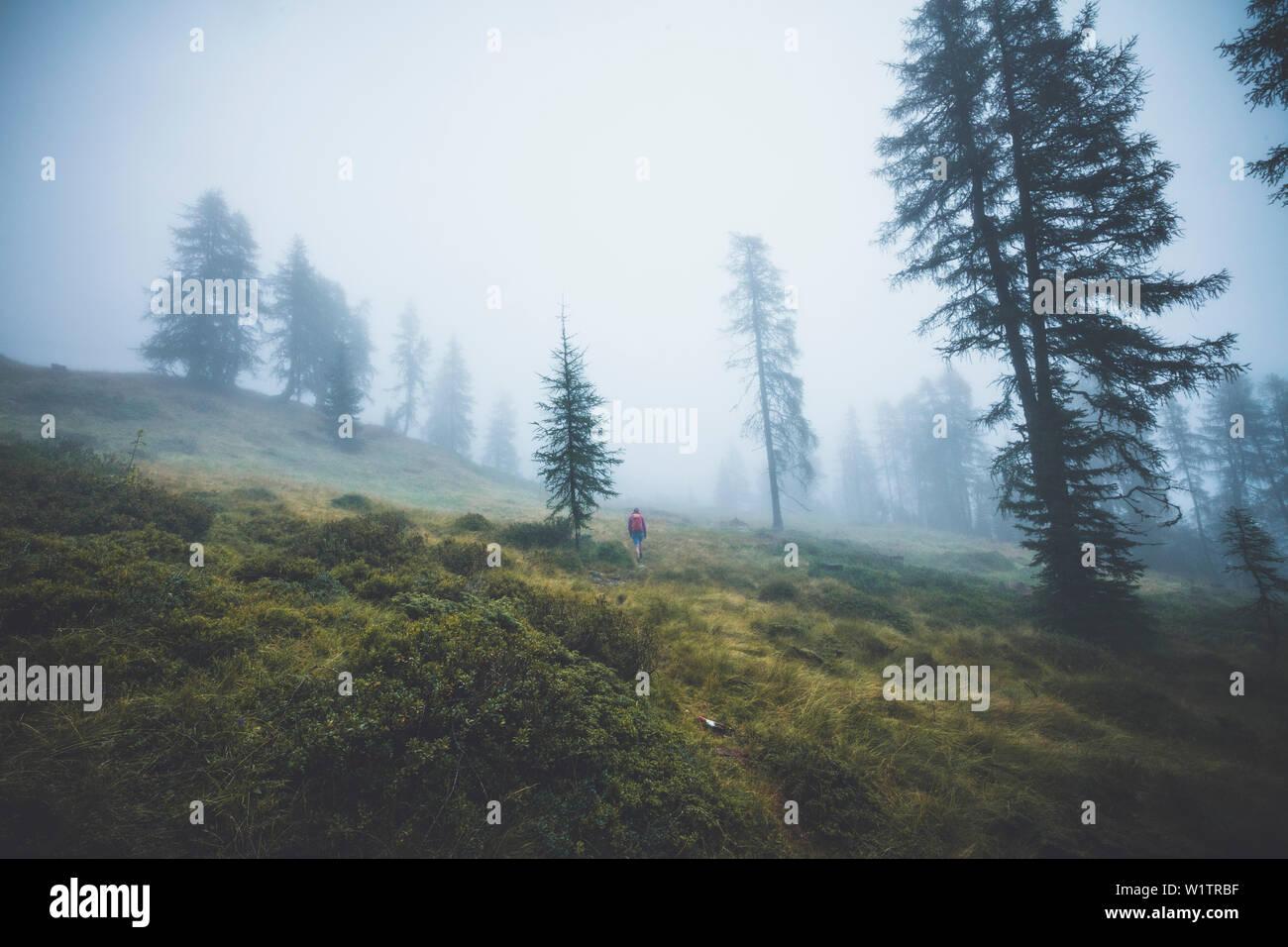 Climber in the misty forest, E5, Alpenüberquerung, 4th stage, Skihütte Zams,Pitztal,Lacheralm, Wenns, Gletscherstube, Zams to Braunschweiger Hütte, ty - Stock Image