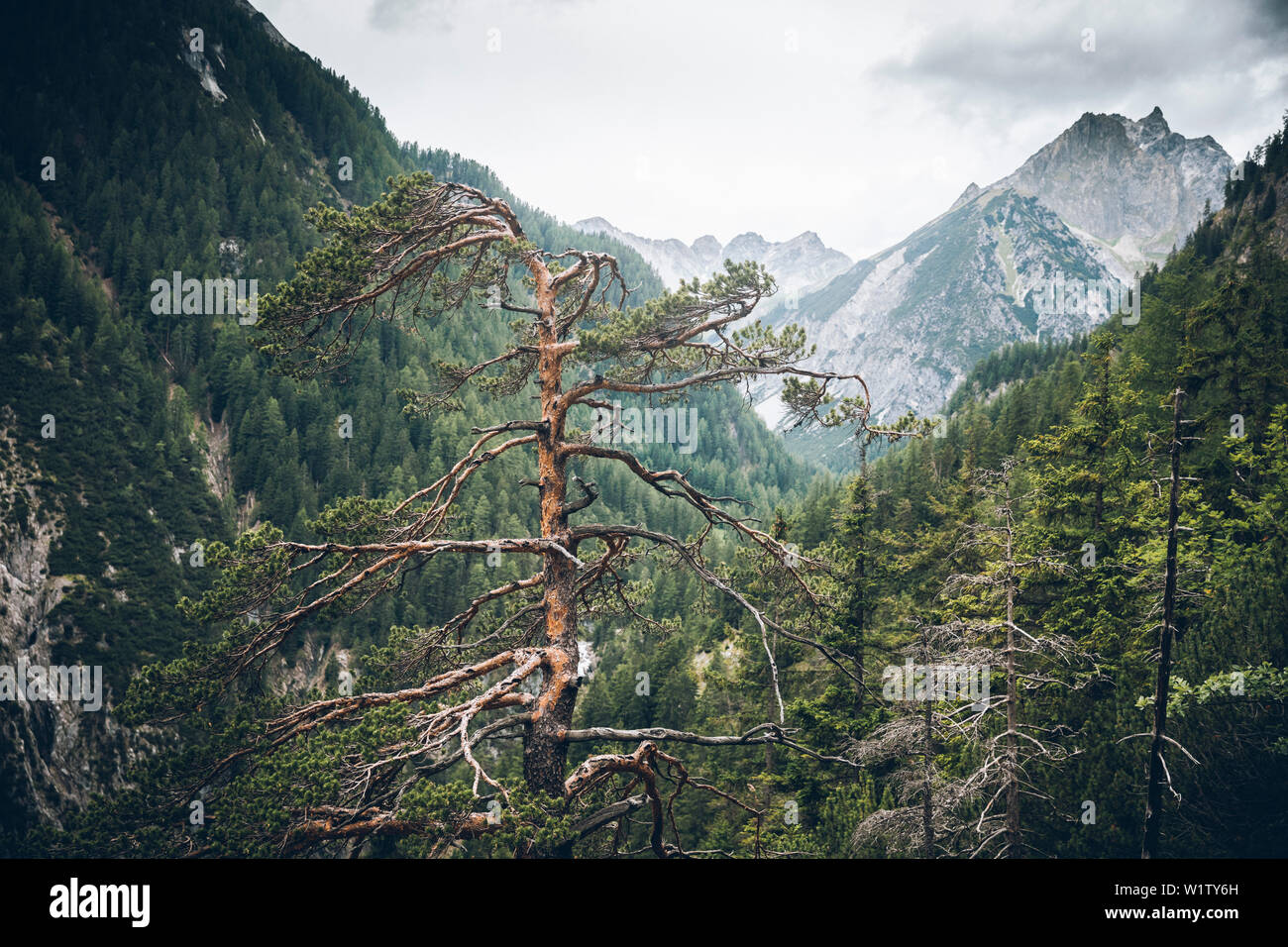 Tree tops with mountain peak in the background, E5, Alpenüberquerung, 3rd stage, Seescharte,Inntal, Memminger Hütte to Unterloch Alm, tyrol, austria, Stock Photo