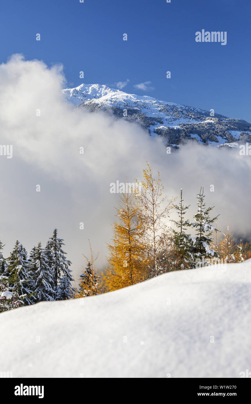 Mountain forest in the Zillertal Alps with view to the Tuxer Alps, Ramsberg, Hippach, Zell am Ziller, Tirol, Austria, Europe Stock Photo