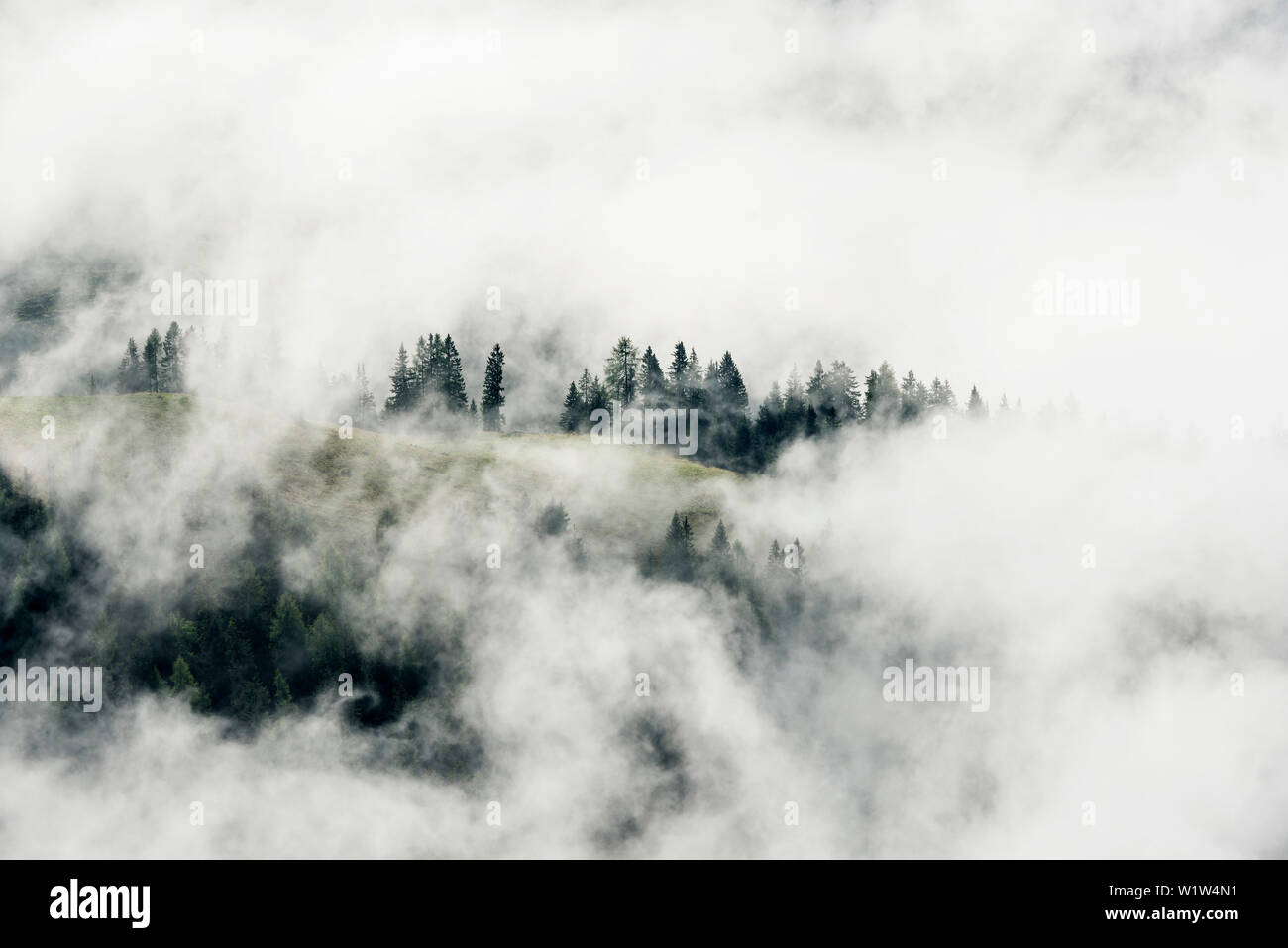 pine forest and clouds, view from Mt Jenner, Berchtesgaden National Park, Berchtesgadener Land district, Upper Bavaria, Bavaria, Germany - Stock Image