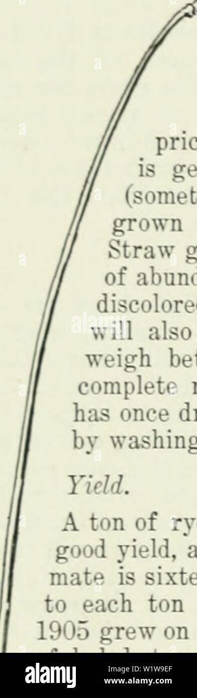Archive image from page 627 of Cyclopedia of farm crops . Cyclopedia of farm crops : a popular survey of crops and crop-making methods in the United States and Canada  cyclopediaoffarm00bailuoft Year: 1922, c1907 562 RYE RYE acceptable methixl of baling rye-straw. The bales weigh 2(.X) to 250 pounds each. A hay car will hold about ten tons of baled straw. Long, clean, bright straw will usually sell at prices approximating that of good timothy hay. The straw must be bright if it is to bring a good Stock Photo