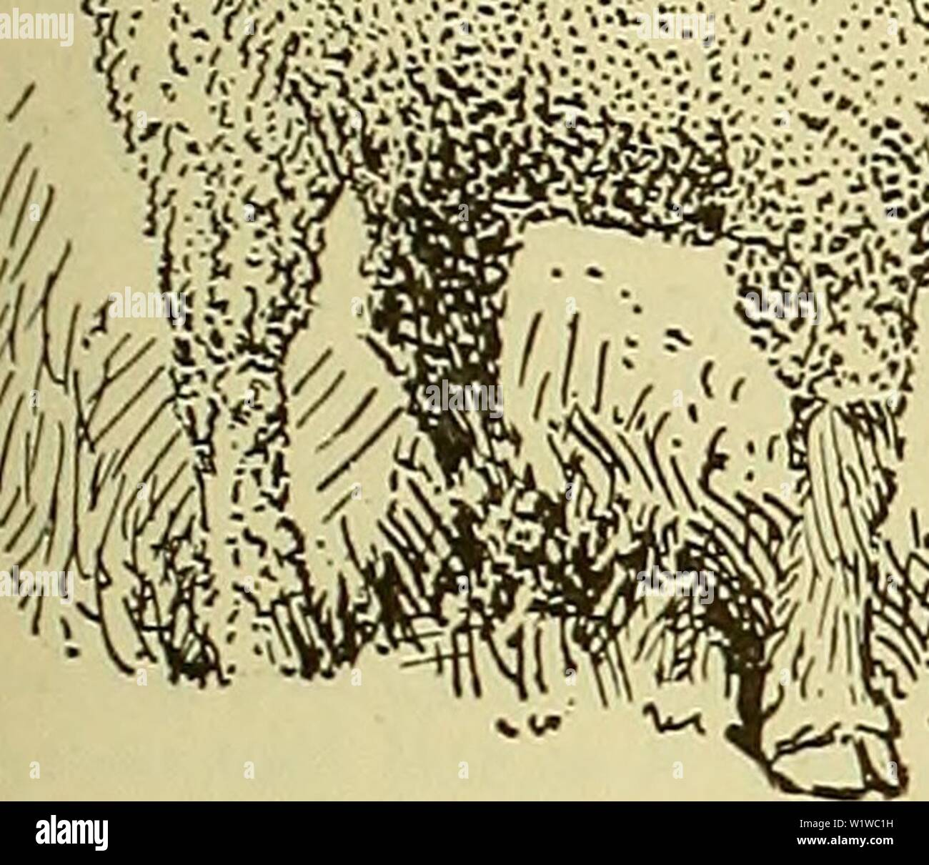 Archive image from page 682 of Cyclopedia of farm animals (1922) Stock Photo