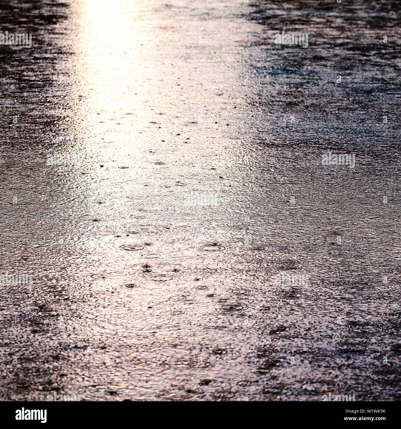 Rain drops on the surface of water in a puddle. Rainy day. Stock Photo