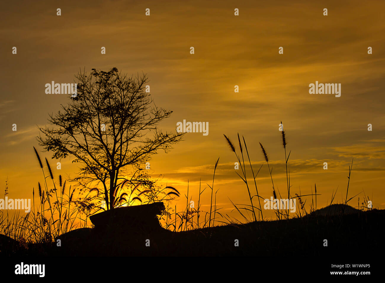 The morning sun light behind the mountains and the tree. Stock Photo