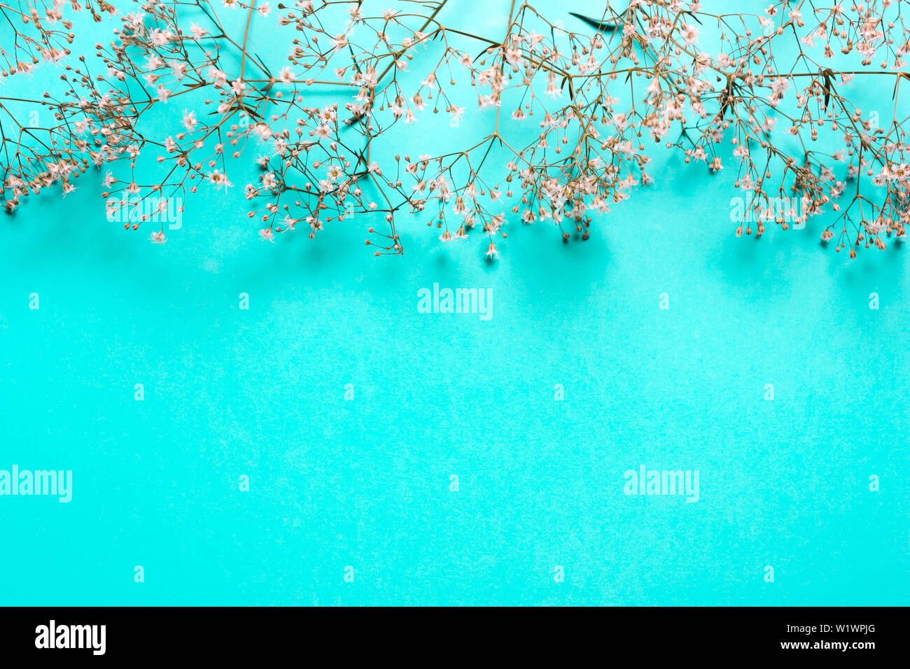 Wedding Summer Pastel Background Composition Of White Flowers On A Blue Background Flat Lay Copy Space Stock Photo Alamy