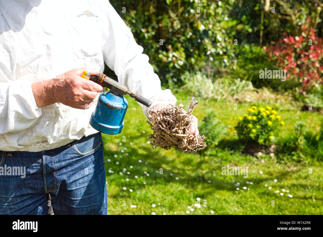 Hands of beekeeper in protective clothing switching on the smoker with lighter and paperboard while standing at apiary - Stock Image
