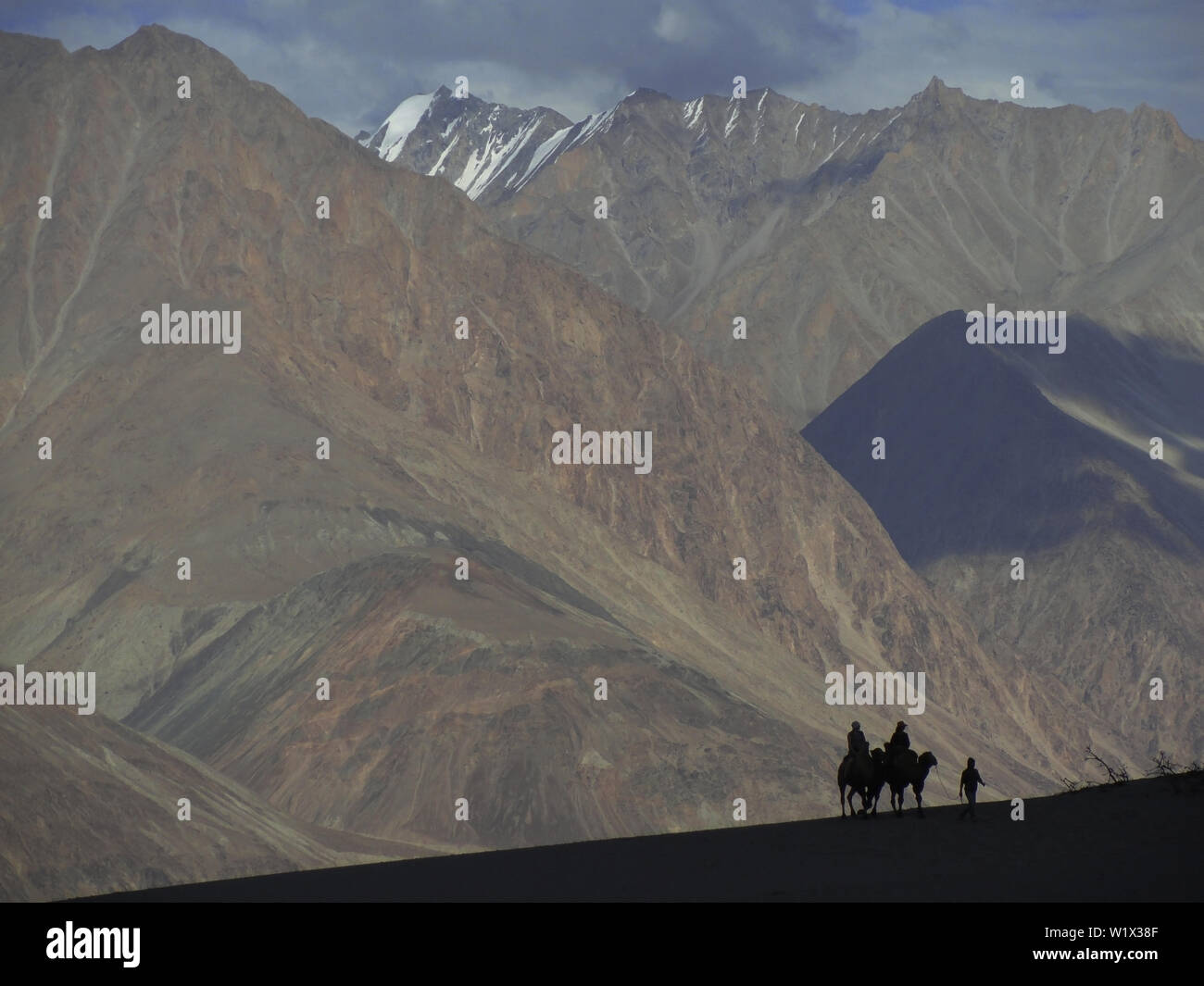 In the afternoon the silhouette of two tourist being towed by the camel herdsmen in the Himalayas. - Stock Image