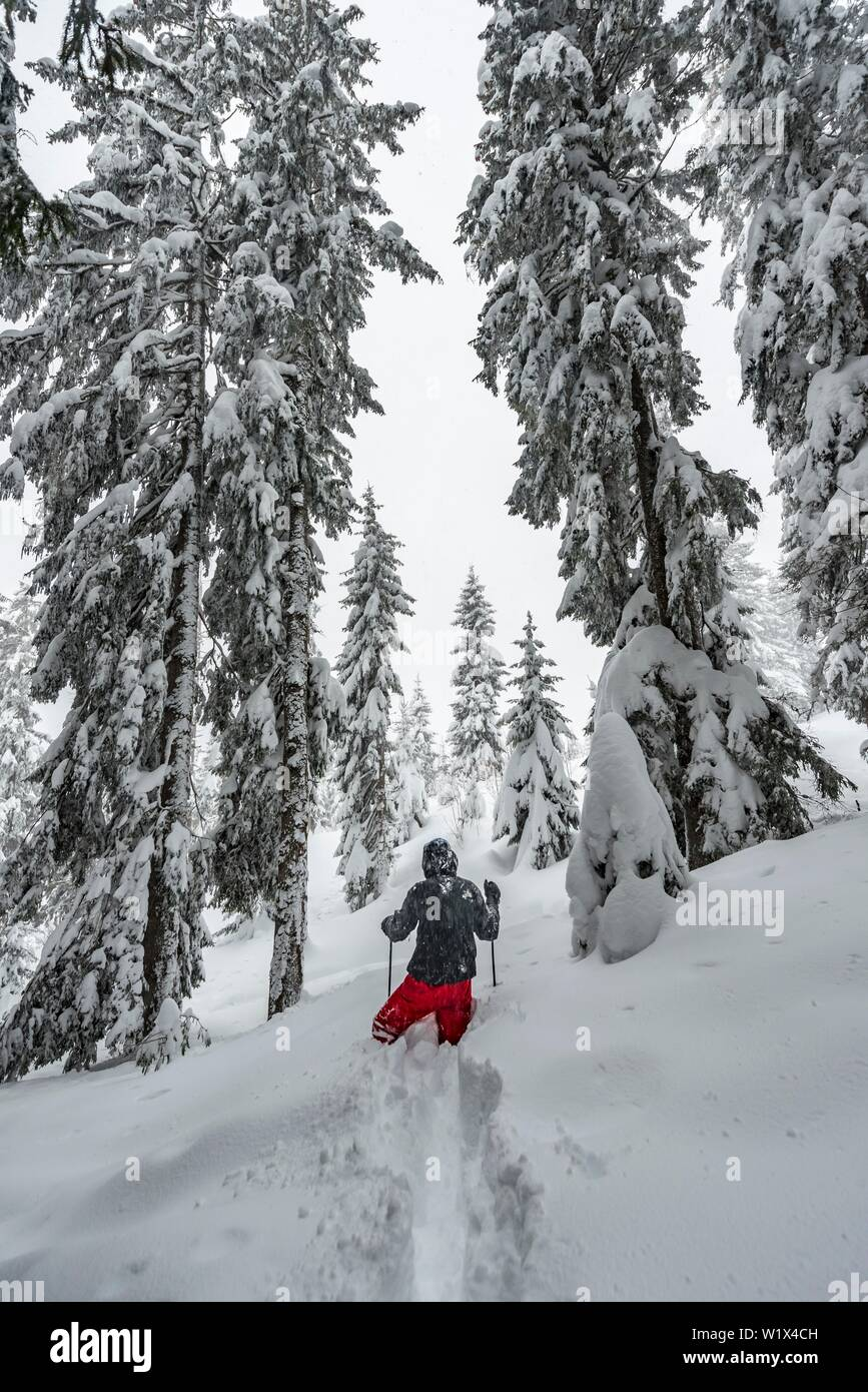 Young man running through deep snow, hiking in winter, deep snow in the forest, Brixen im Thale, Tyrol, Austria, Europe Stock Photo