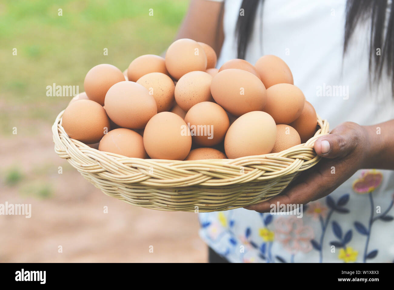 Eggs in a basket / Woman farmer holding wooden tray with fresh chicken eggs collect from farm in the countryside - Stock Image