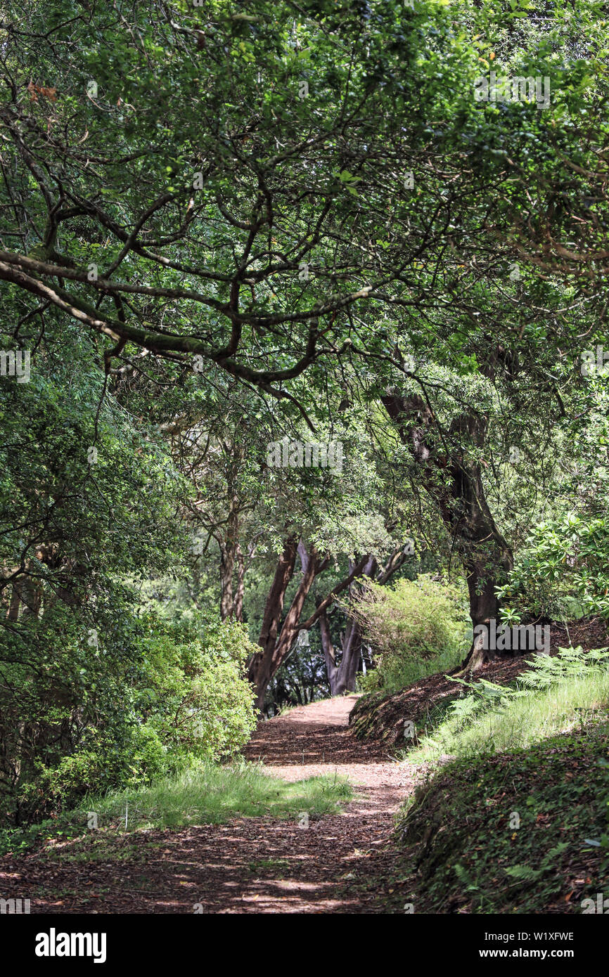 Anthony Woodlands, Torpoint Cornwall. A pathway through the woods, beside the River Lynher Stock Photo