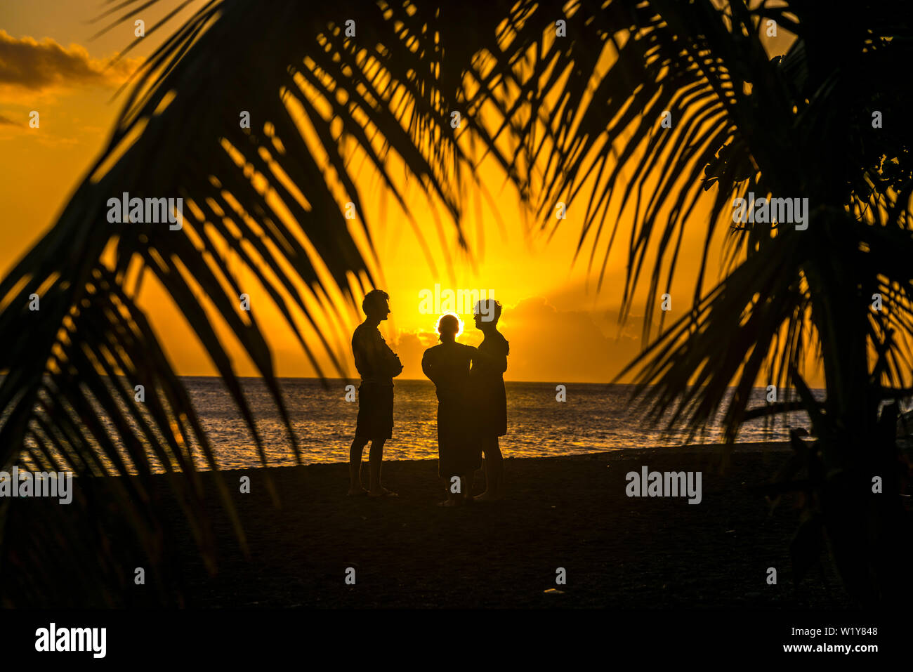 Sonnenuntergang am Strand unter Palmen am Meer, Guadeloupe, Frankreich  |  sunset under palm trees at he beach in Guadeloupe, France Stock Photo