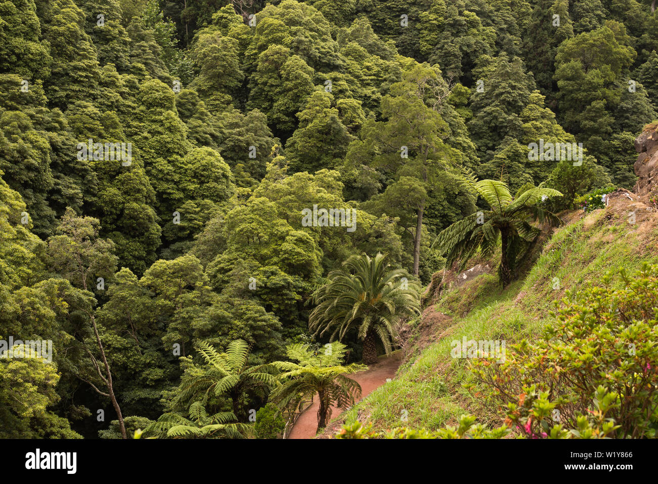 Fresh green color of the vegetation, which includes also generic plants. Nature park with a waterfall in Nordeste, Sao Miguel, Azores Islands, Portuga - Stock Image