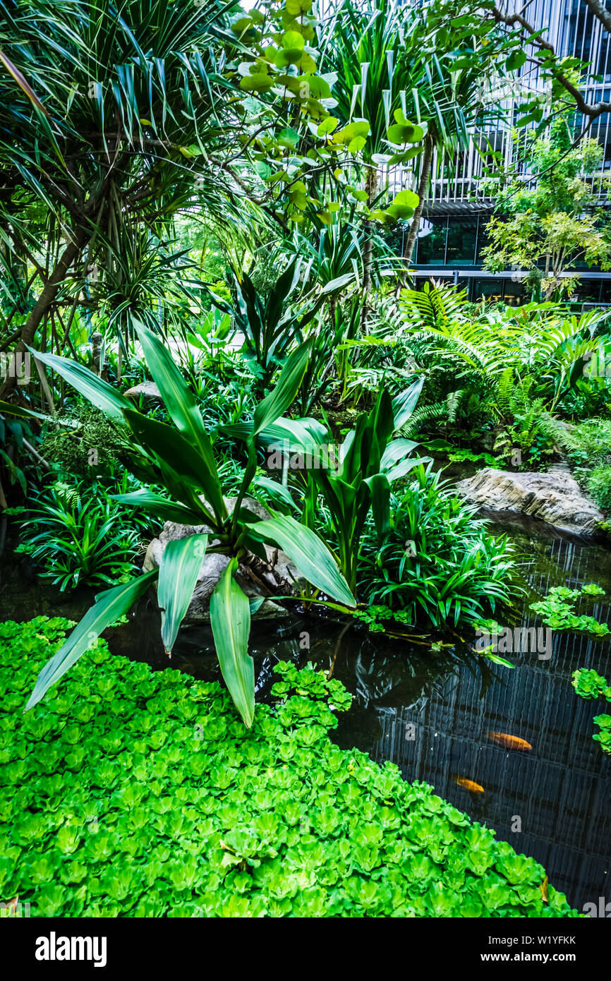 Beautiful garden with pond and fishes. Stock Photo