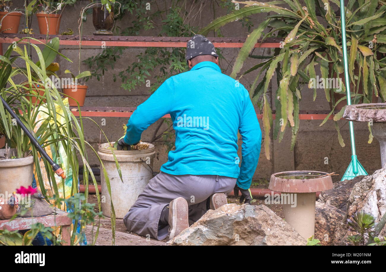Johannesburg, South Africa - an unidentified black male migrant worker does manual work in a domestic garden in the city Stock Photo