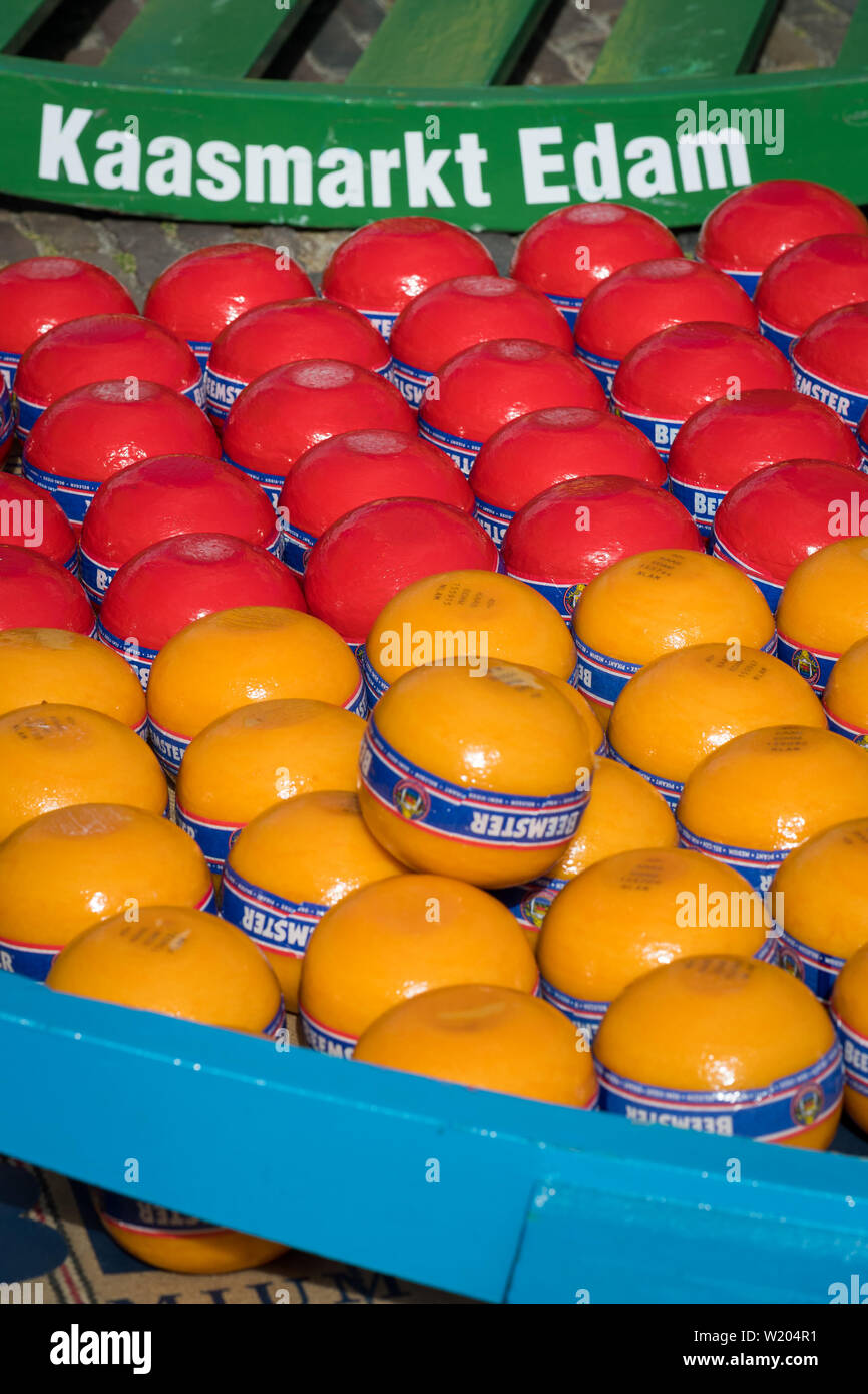 Edam, Netherlands - July 2019: Edam cheeses at the first cheese market of the season - Stock Image
