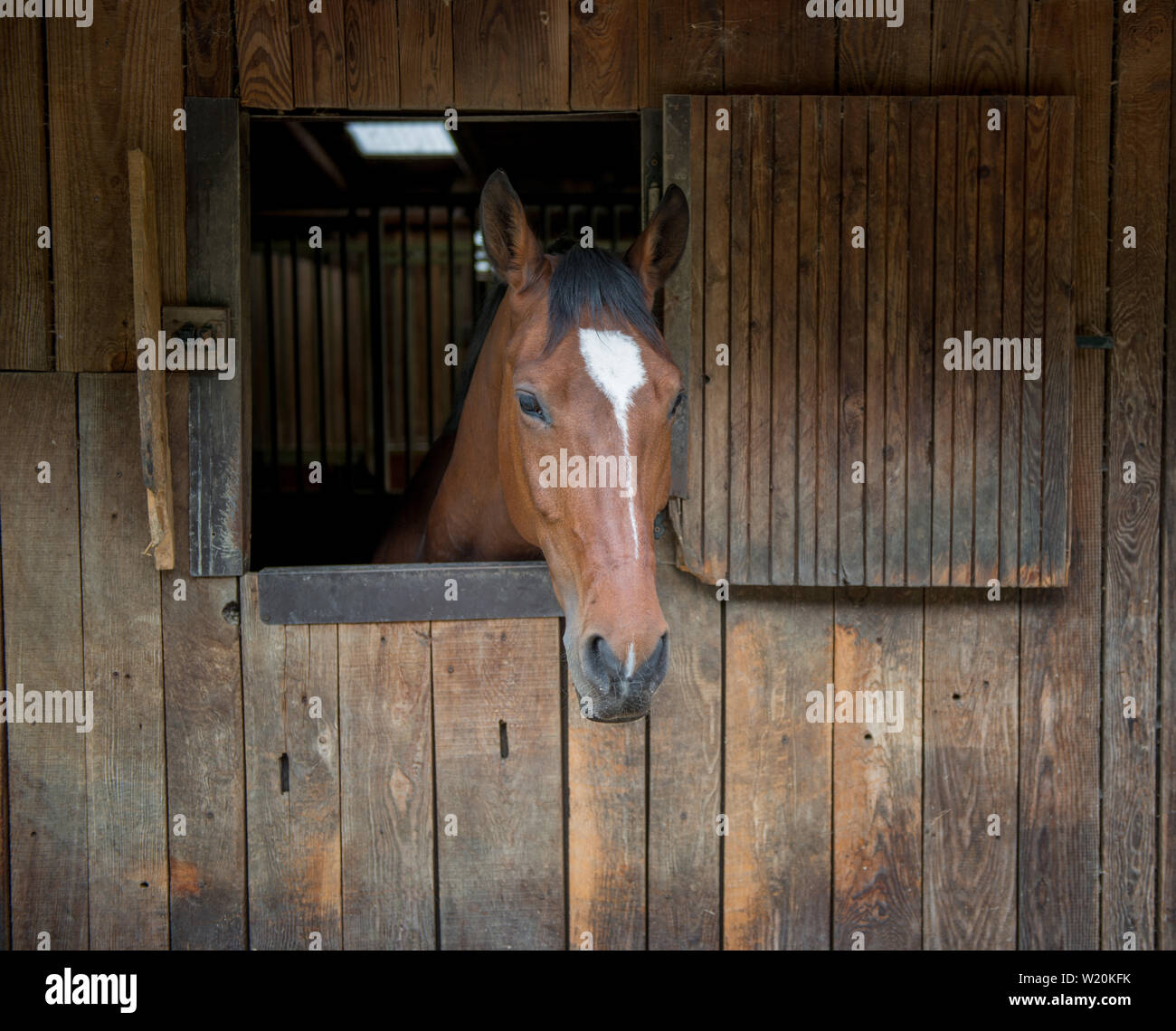 horse resting in the stable - Stock Image