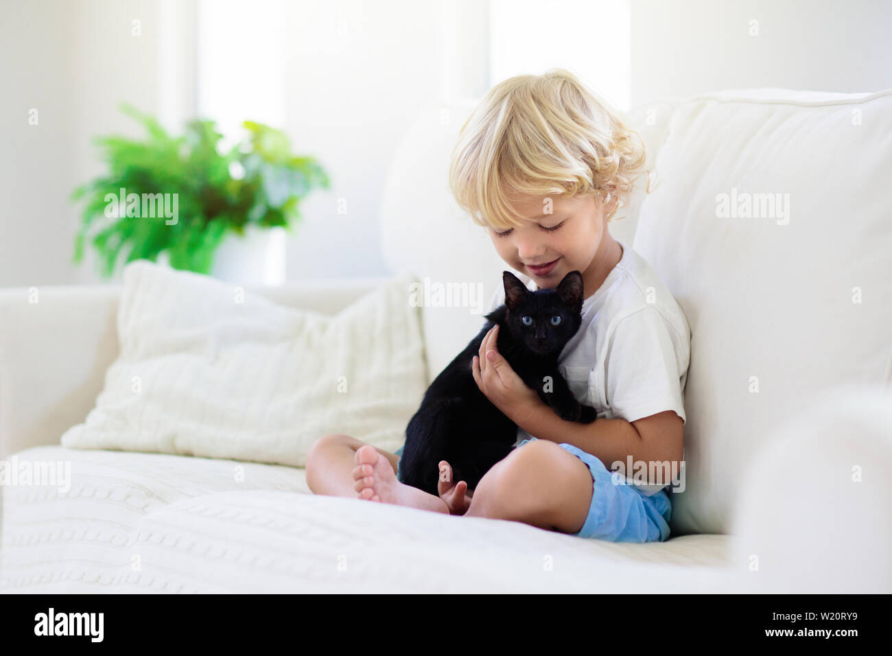 Pleasant Child Playing With Baby Cat Kid Holding Black Kitten Dailytribune Chair Design For Home Dailytribuneorg