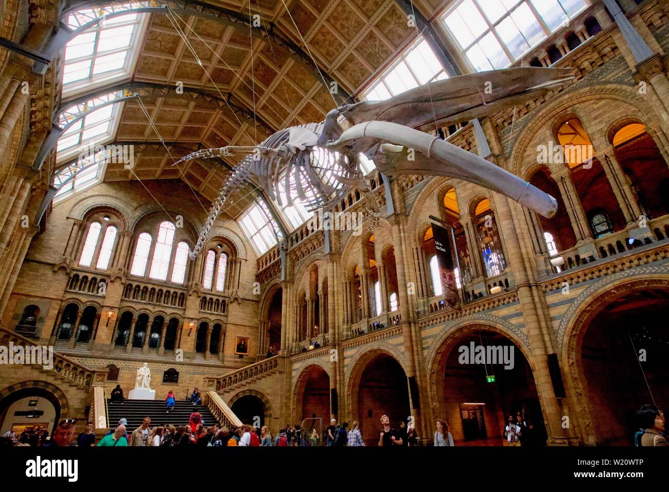 Natural History Museum, Cromwell Road, South Kensington, Royal Borough of Kensington and Chelsea - Blue Whale skeleton - Stock Image