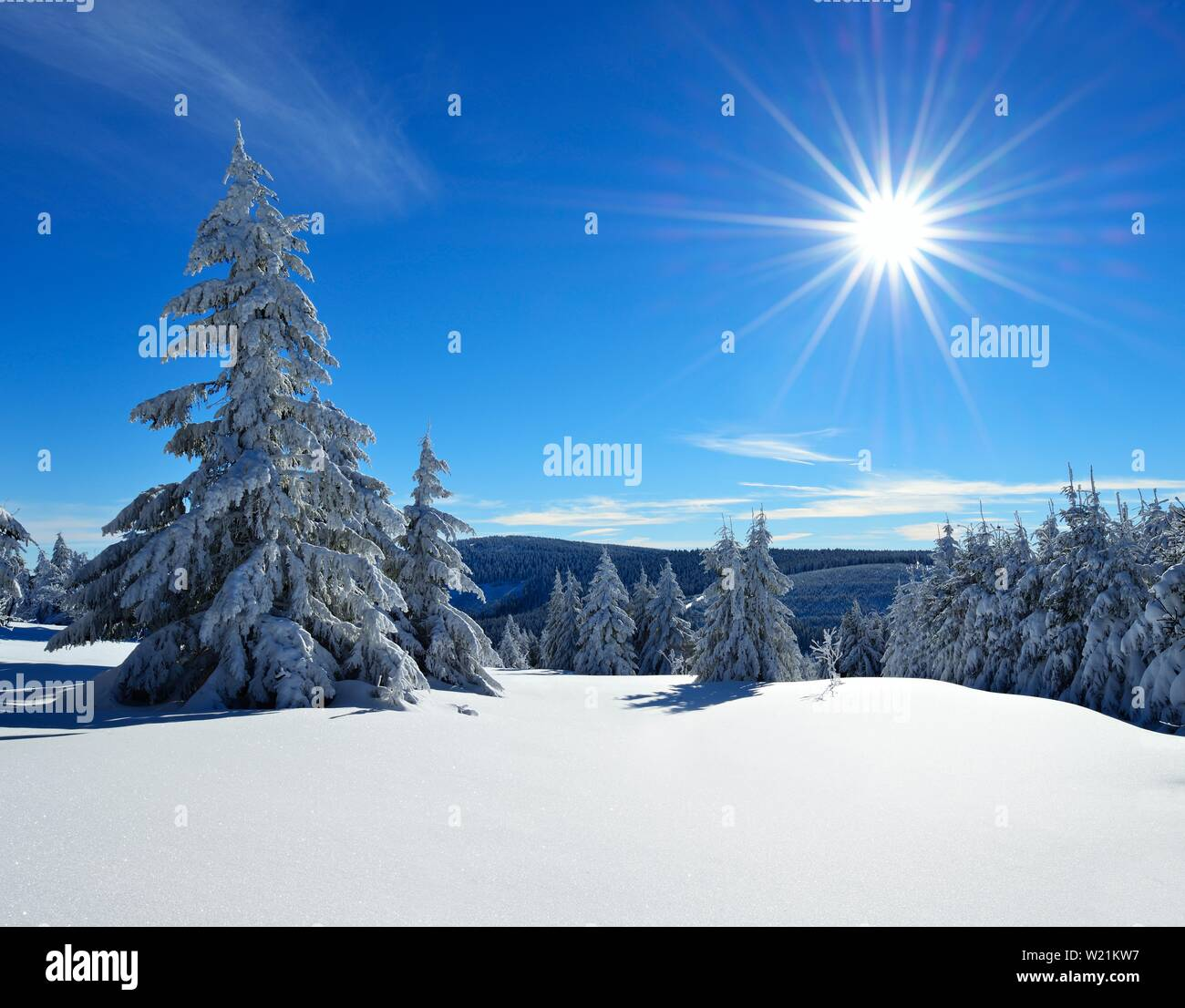 Snow-covered winter landscape, spruces covered with snow at morning sun, Fichtelberg near Oberwiesenthal, Erzgebirge, Saxony, Germany - Stock Image
