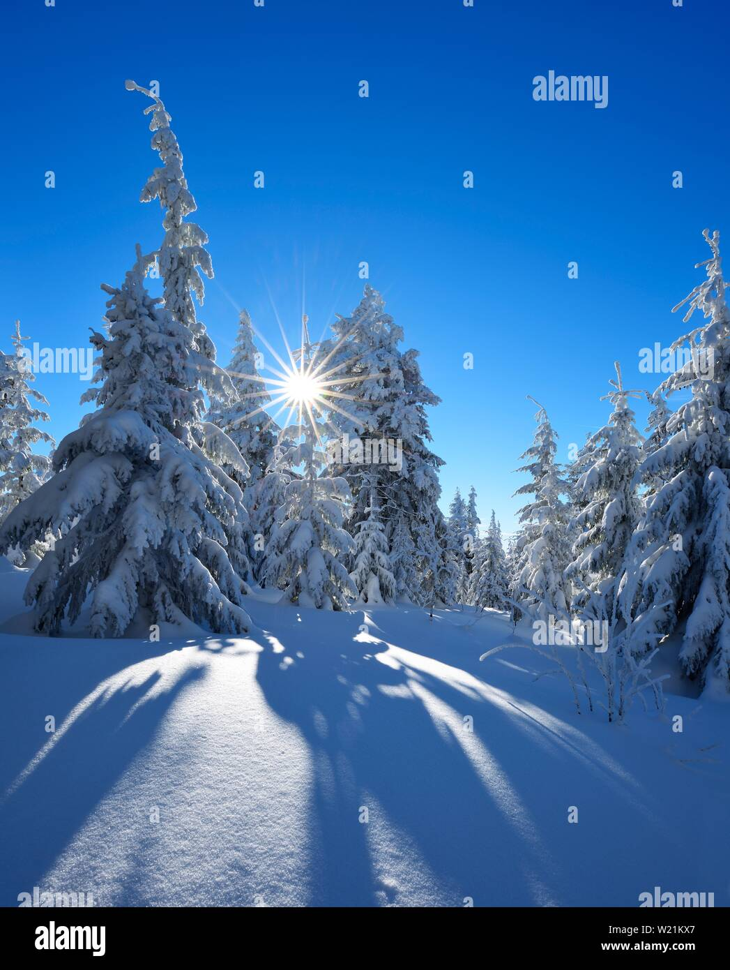 Snow-covered winter landscape at Fichtelberg, spruces covered with snow in bright sunshine, near Oberwiesenthal, Erzgebirge, Saxony, Germany - Stock Image