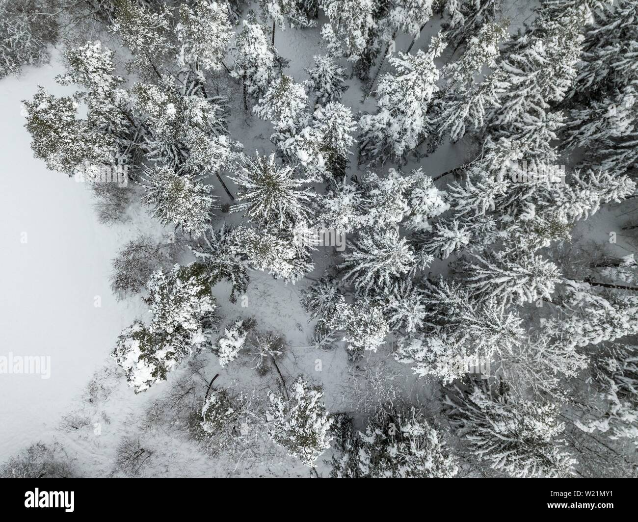 Snow-covered spruce forest from above, bird's eye view, Bavaria, Germany - Stock Image